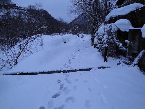 森の湯ルート早朝.jpg