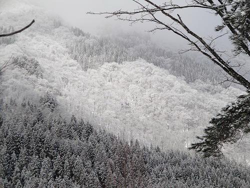 福地の山.jpg