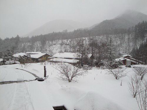 草円雪.jpg